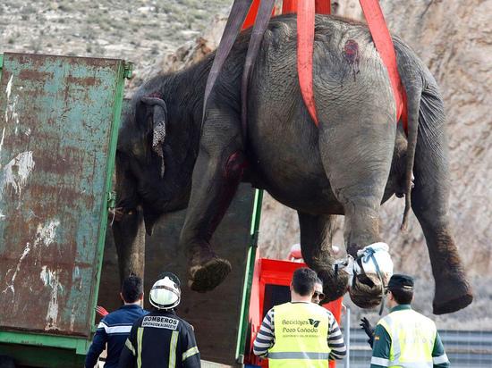 ДТП «Элефант»: на шоссе перевернулся грузовик со слонами