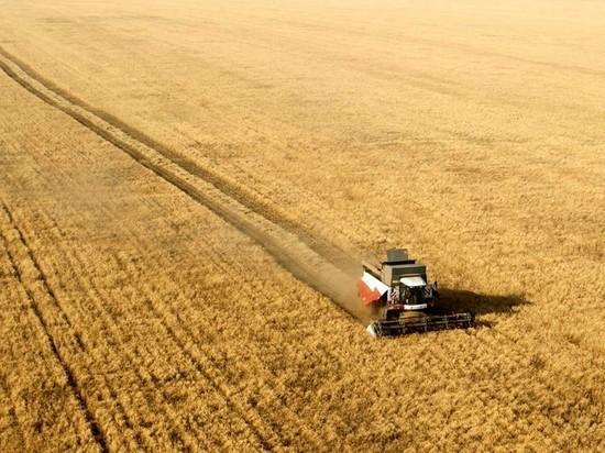Сельское хозяйство – гарант продовольственной безопасности: аграрии работают на перспективу