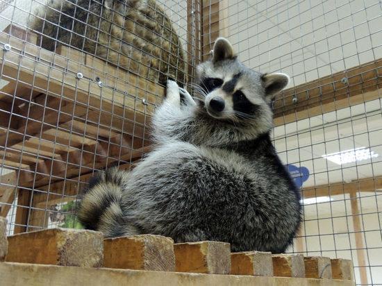У Иркутской зоогалереи арестован счет