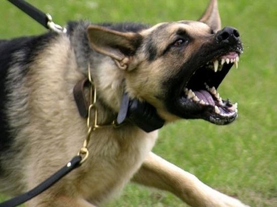 Собака сорвалась с поводка и напала на девочку в Екатеринбурге