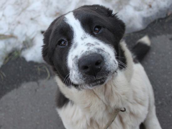 300 рублей за собачьи фекалии: волонтеры Куркино организовали акцию чистоты