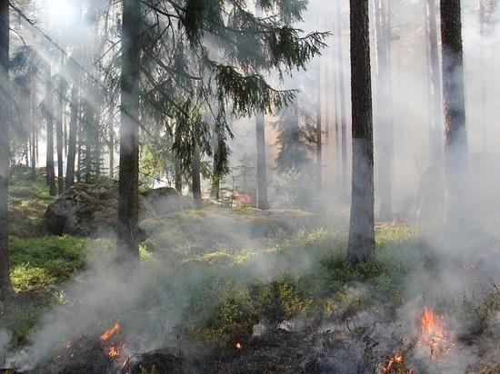 На территории Югры установлен пожароопасный сезон