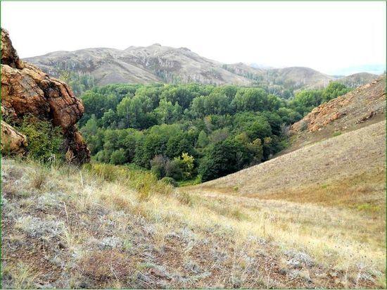 Оренбургский минлесхоз незаконно передал в аренду тысячу гектаров леса в Кувандыке