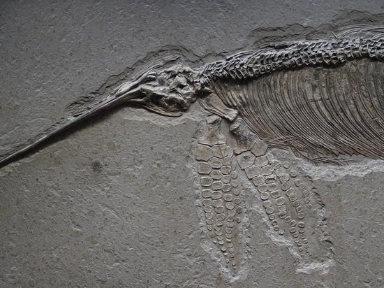 Палеонтологи нашли останки беременного ихтиозавра