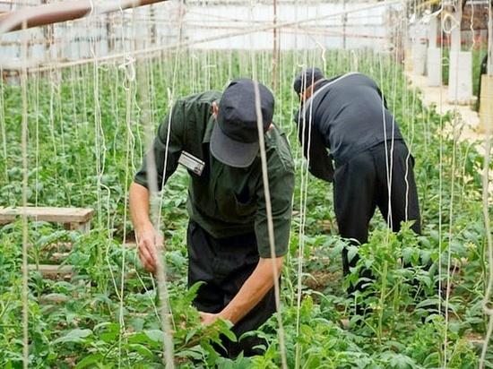 В Оренбургской области осужденные будут выращивать овощи и поросят