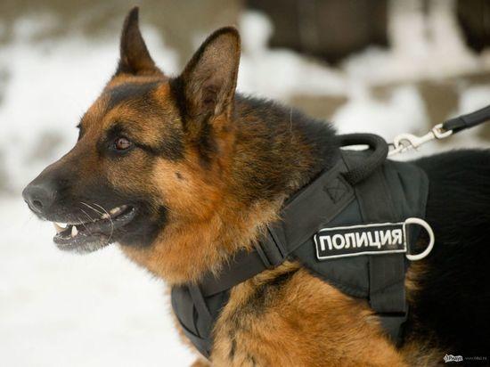 В Сызрани в подъезде жилого дома обнаружили подозрительный чемодан