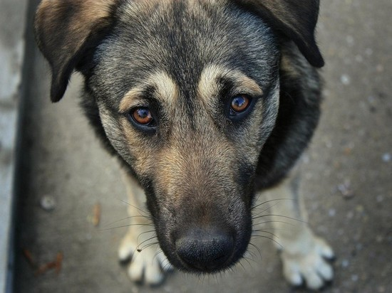 В Ульяновске спасли собаку, израненную живодерами