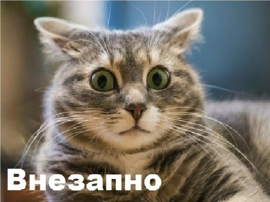 Почта России снизила цены чай и порошки