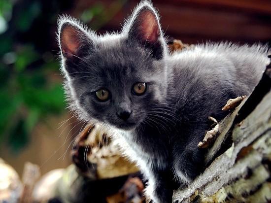 В Набережных Челнах горожане спасли застрявшего на дереве котенка