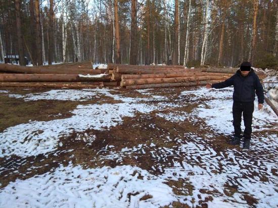 «Черные лесорубы» из Балаганского района заготовили леса на 56 млн рублей