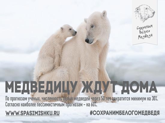 В регионе стартовал экологический проект «Сохрани белого медведя»