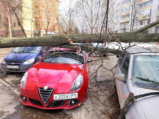 В Казани дерево свалилось на Alfa Romeo