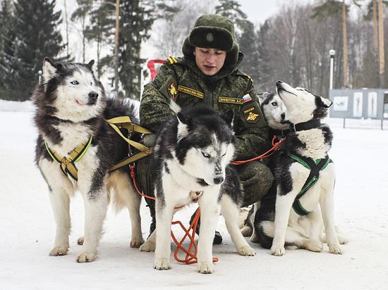 Как тренируют собак в закрытом питомнике Минобороны
