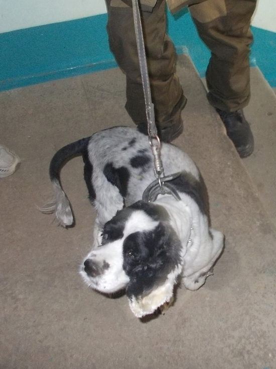 В Орле из запертой квартиры вызволили собаку
