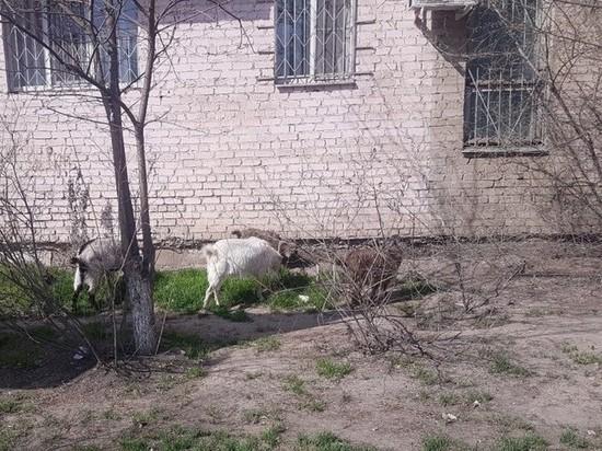 В Астрахани на студенток совершили нападение: «Это были настоящие козлы»