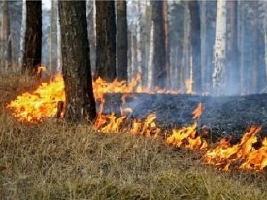 В Иркутской области 15 апреля введен особый противопожарный режим