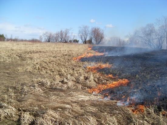 Для обнаружения палов сухой травы в регионе выставлены 13 постов