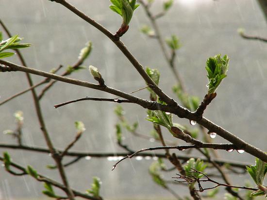 Жара и дожди: переменчивую погоду стоит ждать тулякам на грядущей неделе