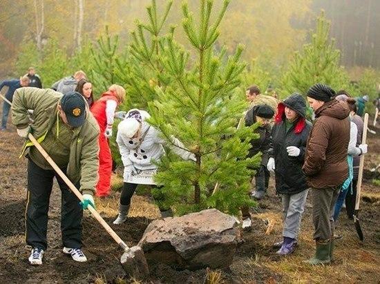 В Кашинском районе на 9 мая посадят новые деревья