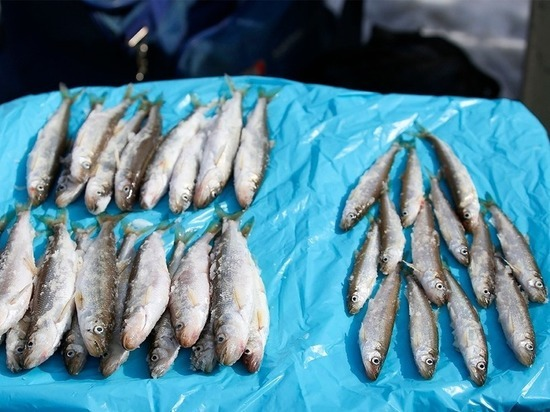 Опасную для здоровья рыбу обнаружили в Приморье