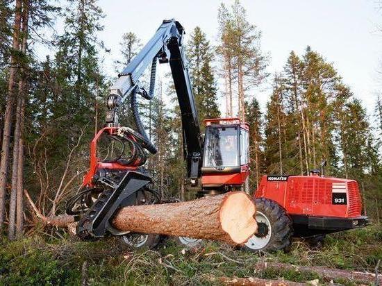 Лесопользователи-нарушители вернули в госбюджет более 12 миллионов рублей