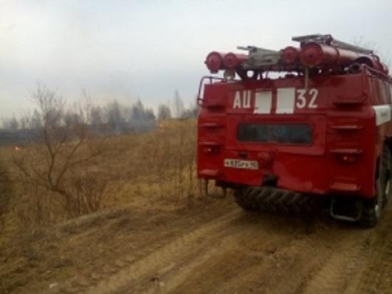 Два гектара леса сгорели под Калугой