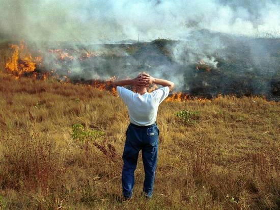 Весенние пожары в Москве: чем опасны поджоги травы