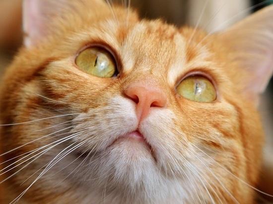 В Минстрое решили разрешить котам заходить в подвалы жилых домов
