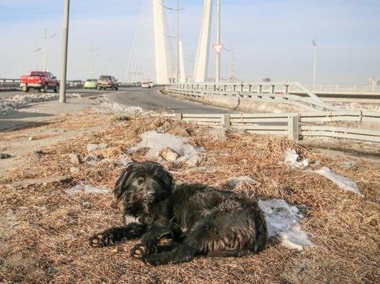 Жители Владивостока боятся посещать городской парк