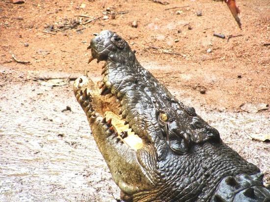 В Мексике предполагаемого насильника бросили в вольер с крокодилами