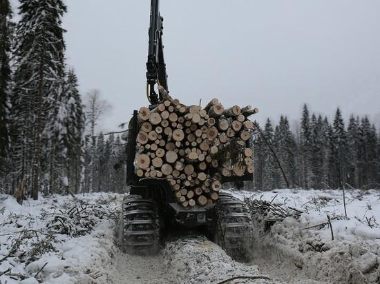 Отсрочка приговора: лес на территории будущего заказника пока рубить не будут