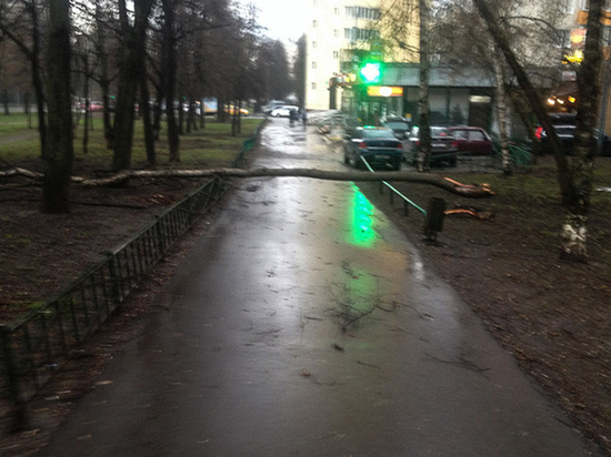 Ураган убивал москвичей вагончиками, травмировал деревьями: видео и фото последствий