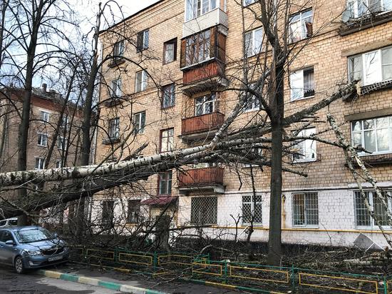Все о московском урагане: когда повторится, что нужно укрепить
