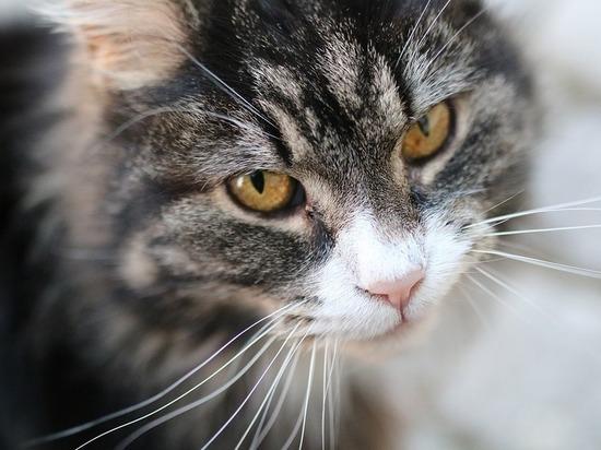 Замурованным в подвалах кошкам дадут свободу