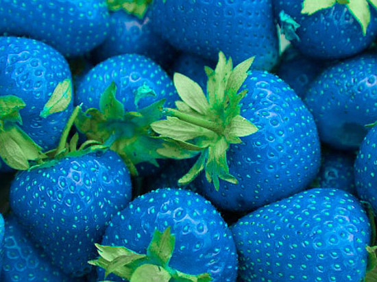 Огурлимон и синяя клубника: что впаривают доверчивым дачникам