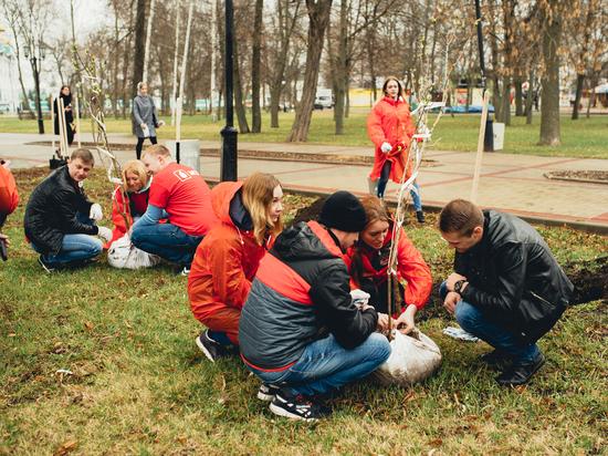 Росток легендарного сталинградского тополя посажен в самом центре Тамбова