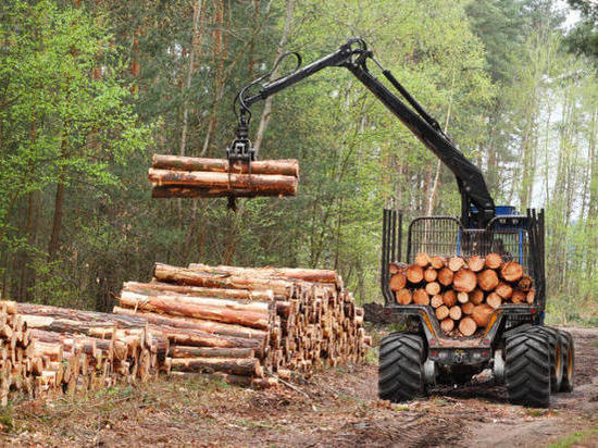 Объемы лесозаготовки в Костромской области выросли на 12 процентов