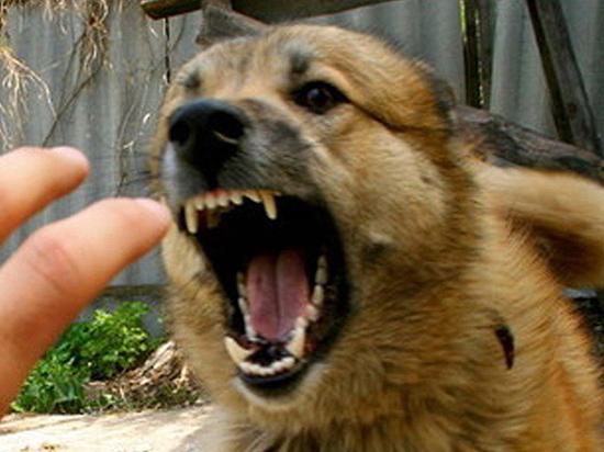 Осторожно, бешенство: эпидемиологи предупредили владельцев животных