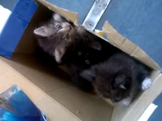 В Новосибирске электричку эвакуировали из-за коробки с котятами: видео
