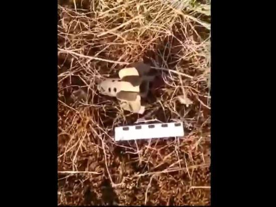 СК опубликовал кадры снаряда, убившего мальчика на полигоне под Калининградом