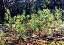 Путин пожертвовал личные деньги, чтобы на территории Иркутского лесничества  посадили недостающие сосны