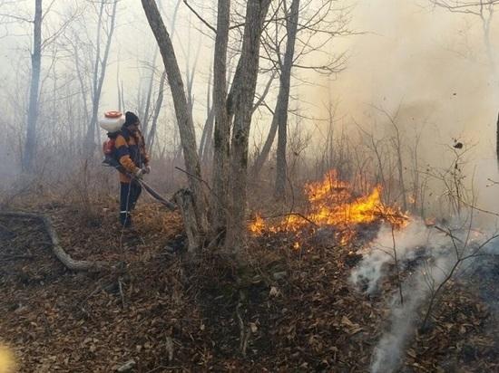 Как обстоят дела с пожарами в Приморье, рассказал Юрий Журавель