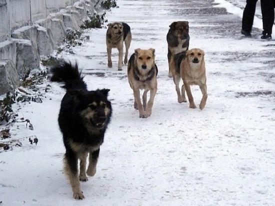 В Мордовии бродячий пес напал на школьника