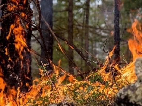 Восемь лесных пожаров ликвидировано в Приангарье 2 мая