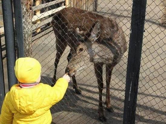 В Саранском зоопарке начался летний сезон