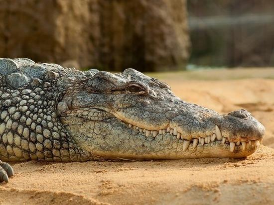 Рептилии оказались не столь отличны от млекопитающих