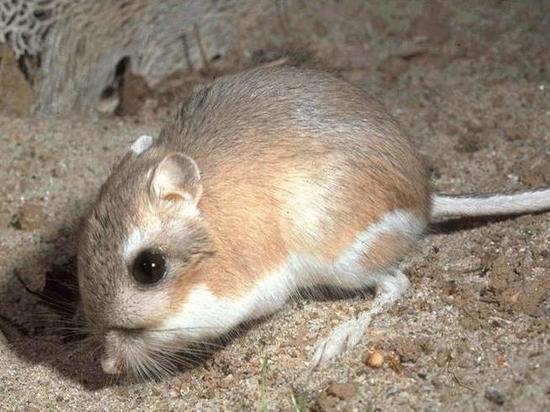В Мексике нашли милых зверьков, считавшихся вымершими