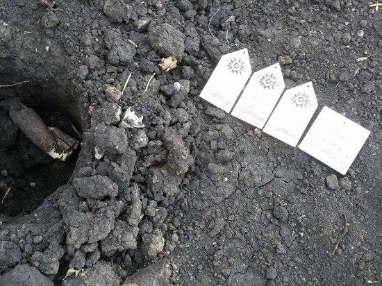В Липецке выкопали деревья, высаженные в честь участников ВОВ