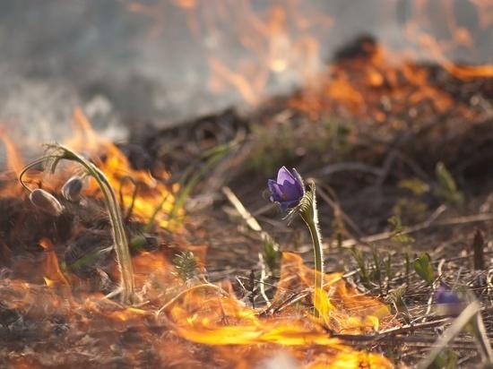 Начались первые травяные пожары под Архангельском
