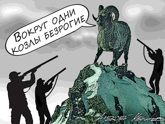 Российским богачам нужны рога: путоранские бараны стали героями